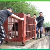 Beren in transport kooi